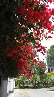 Summer blooms 1