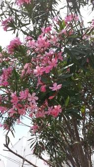 summer blooms 2